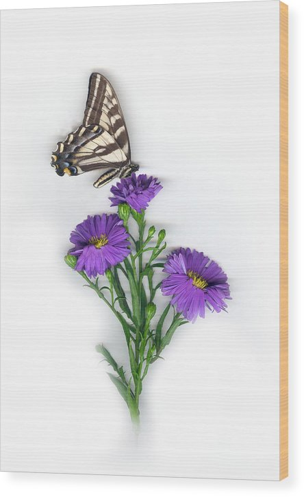Aster Flower Wood Print featuring the mixed media Aster and Butterfly by Sandi F Hutchins