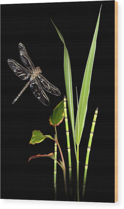 Dragonfly Wood Print featuring the photograph Dragonfly Wings by Sandi F Hutchins
