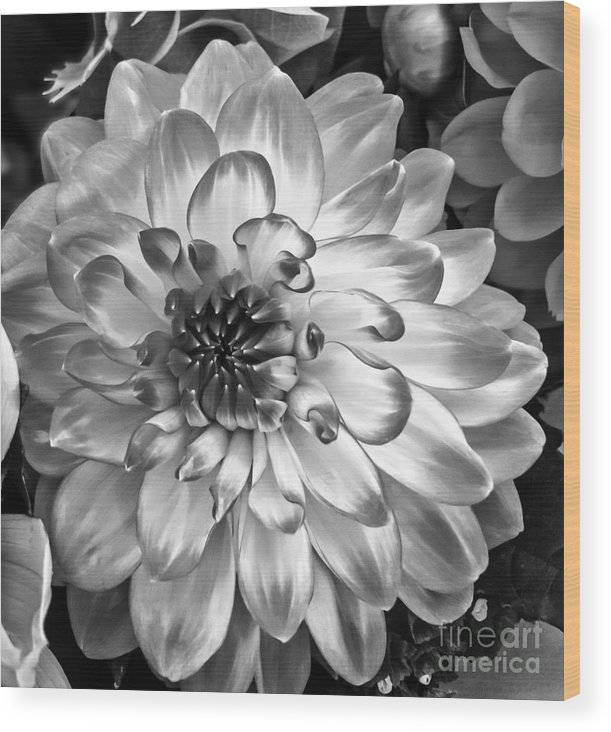 Flower Wood Print featuring the photograph Simply Beautiful by Arlene Carmel