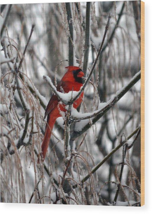 Winter Wood Print featuring the photograph Winter Cardinal by Christina Davis
