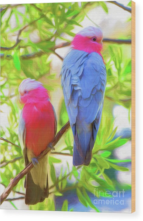 Galahs Wood Print featuring the photograph Rose cockatoos by Sheila Smart Fine Art Photography