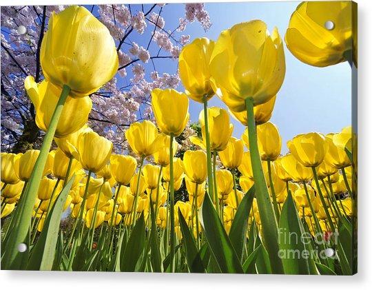 090416p030 Acrylic Print
