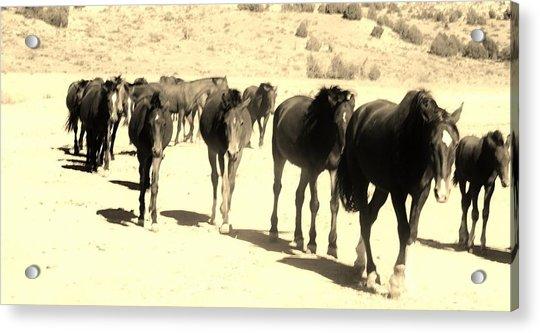 127 Acrylic Print by Wynema Ranch