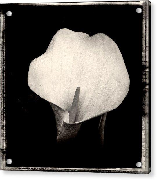 Brooklyn Lily  Acrylic Print