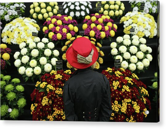 Chelsea Flower Show 2013 - Press Day Acrylic Print by Dan Kitwood