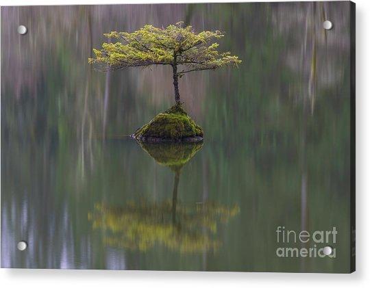 Fairy Lake Fir Acrylic Print