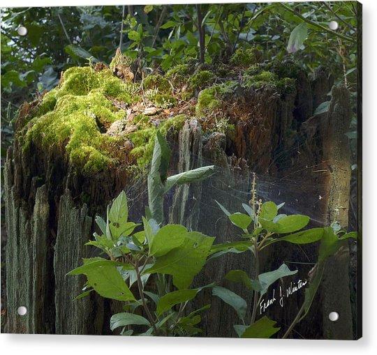 Forest Magic Acrylic Print