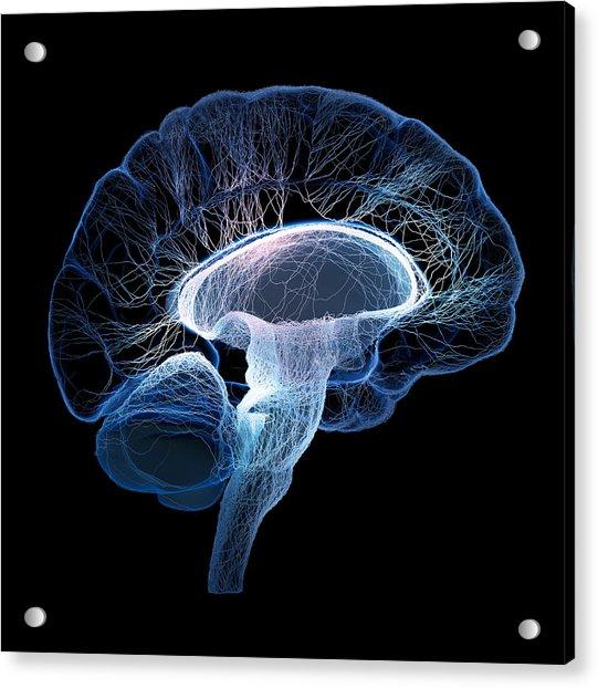 Human Brain Complexity Acrylic Print