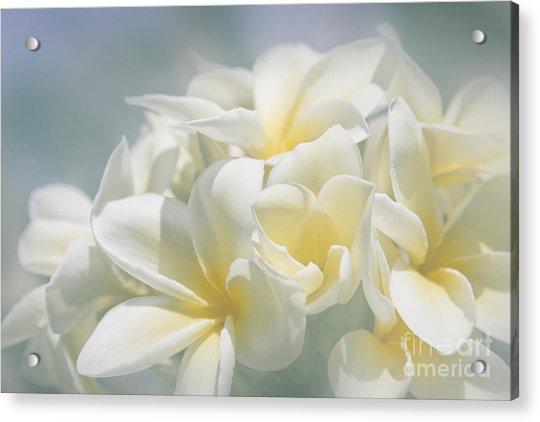 Manakai Acrylic Print