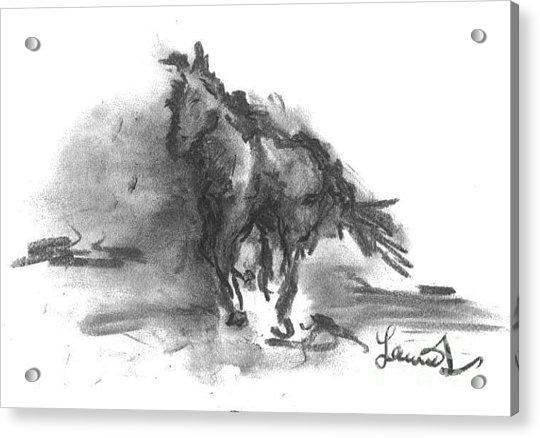 Acrylic Print featuring the drawing My Stallion by Laurie Lundquist