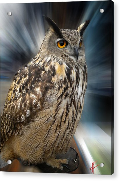 Acrylic Print featuring the photograph Owl Alba Spain  by Colette V Hera  Guggenheim