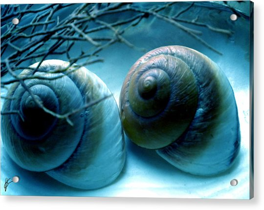 Acrylic Print featuring the photograph Snail Joy  by Colette V Hera  Guggenheim