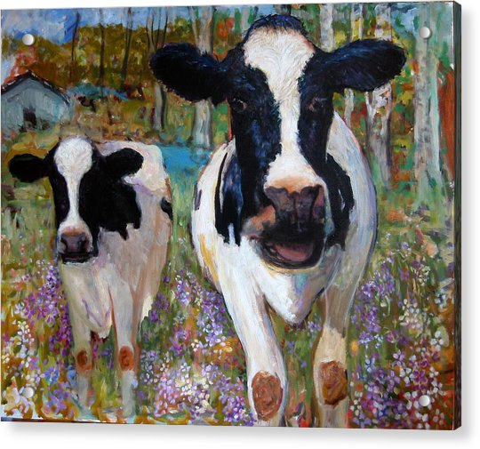 Up Front Cows Acrylic Print