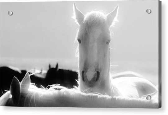 109 Acrylic Print by Wynema Ranch