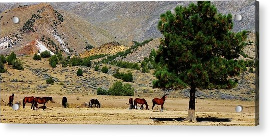 112 Acrylic Print by Wynema Ranch