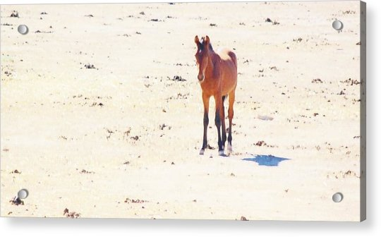 116 Acrylic Print by Wynema Ranch