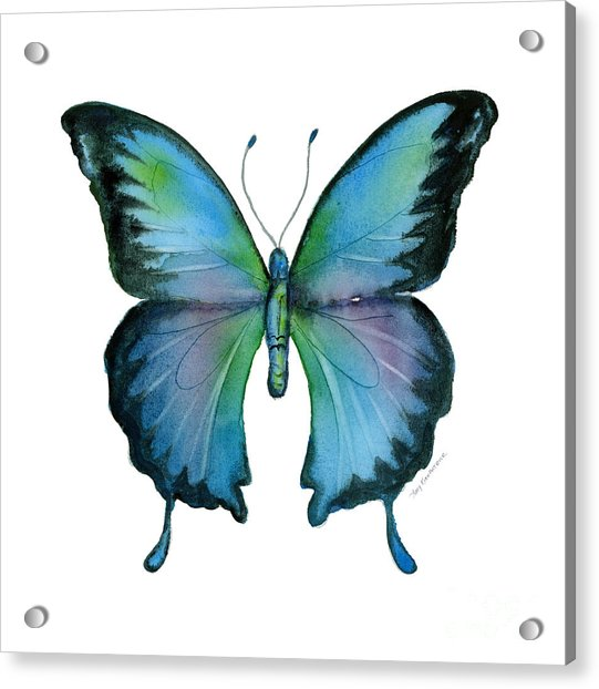 12 Blue Emperor Butterfly Acrylic Print