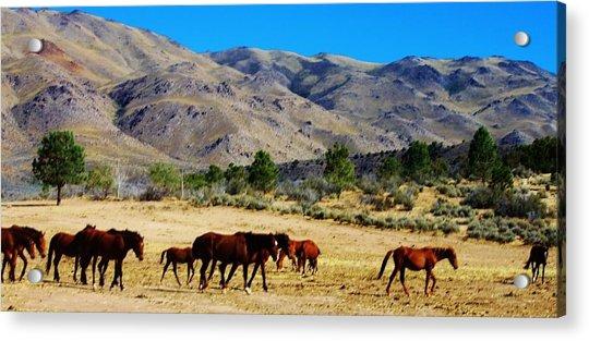 130 Acrylic Print by Wynema Ranch