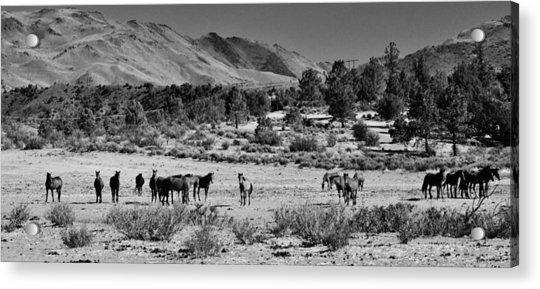 131 Acrylic Print by Wynema Ranch