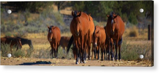 134 Acrylic Print by Wynema Ranch