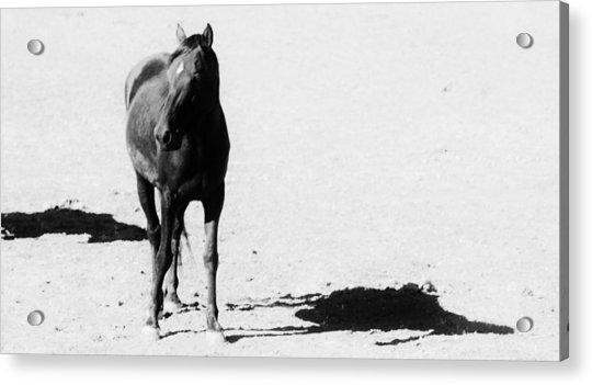146 Acrylic Print by Wynema Ranch