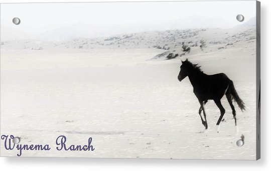 156 Acrylic Print by Wynema Ranch