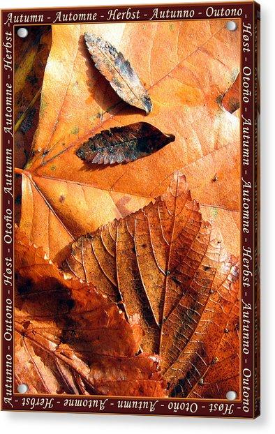 Autumn Leaves 1 Acrylic Print