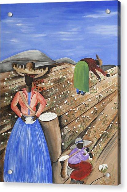 Cotton Pickin' Cotton Acrylic Print