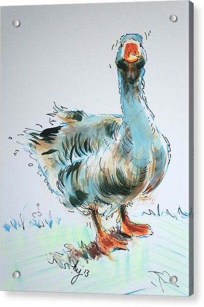 Goose Drawing Acrylic Print
