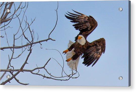 Heron Hunter Acrylic Print