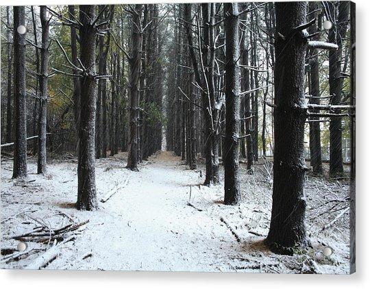 Pines In Snow Acrylic Print