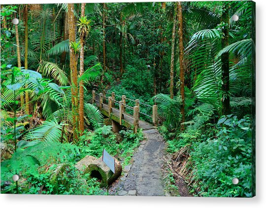 Tropical Rain Forest In San Juan Acrylic Print