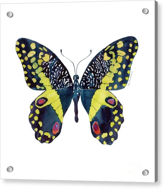 73 Citrus Butterfly Acrylic Print