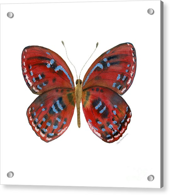 81 Paralaxita Butterfly Acrylic Print