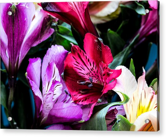 A Bouquet Of Peruvian Lilies Acrylic Print