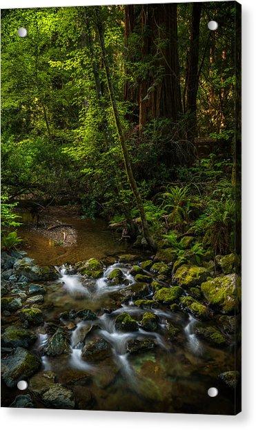 A Creek Among Giants Acrylic Print