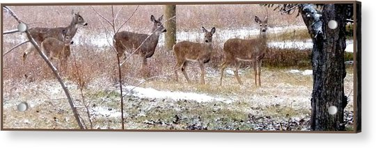 A Dusting On The Deer Acrylic Print