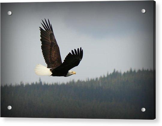 Alaskan Flight Acrylic Print