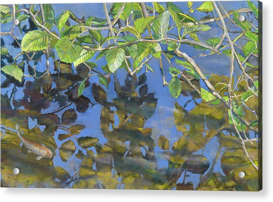 Alder Leaves And Koi Acrylic Print