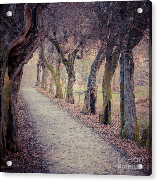 Alley - Square Acrylic Print