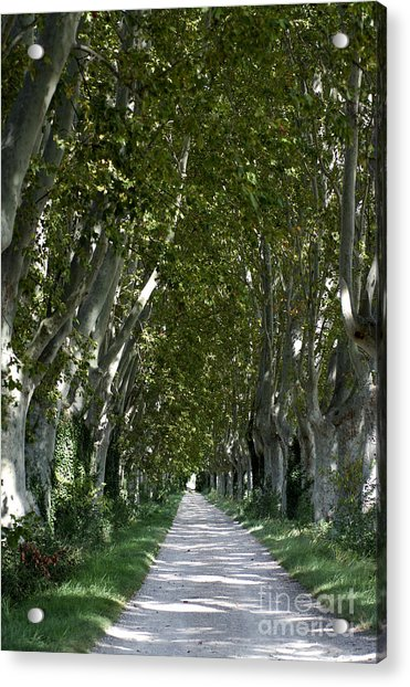 Alley Of Plane Trees. Provence. France Acrylic Print