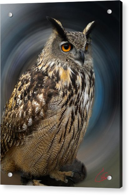Acrylic Print featuring the photograph Almeria Wise Owl Living In Spain  by Colette V Hera  Guggenheim
