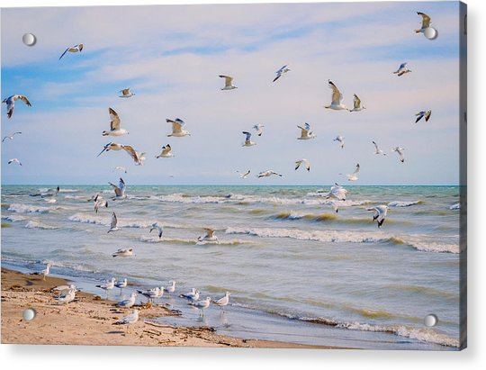 Along The Beach Acrylic Print
