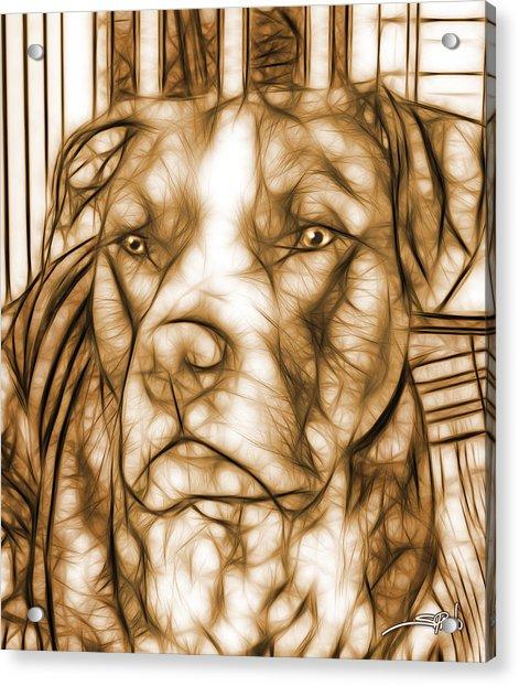 American Pit Bull - Sepia Sketch  Acrylic Print