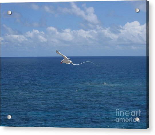 Antigua - In Flight Acrylic Print