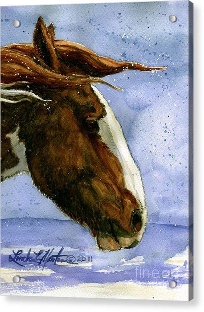 Apache Bachelor Stallion Of Sand Wash Basin Acrylic Print