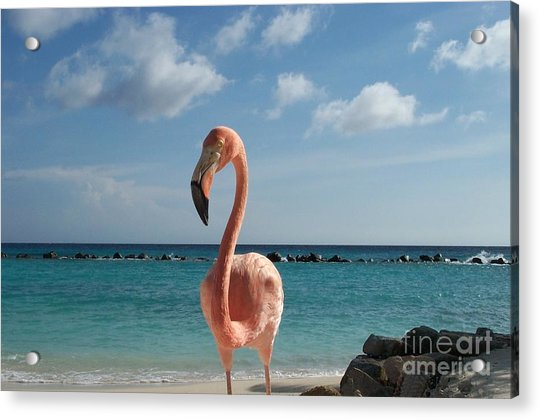 Aruba Hairy Eyeball Acrylic Print