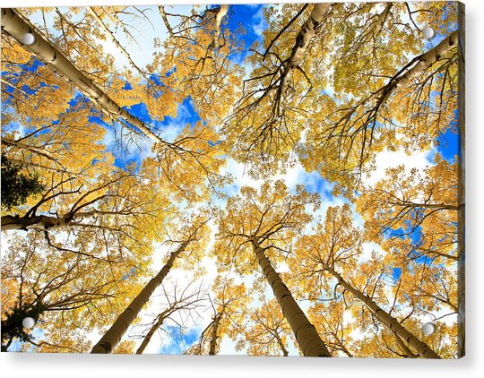 Aspen Sky Acrylic Print by Robert Yone