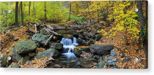 Autumn Creek Panorama With Yellow Maple Trees Acrylic Print
