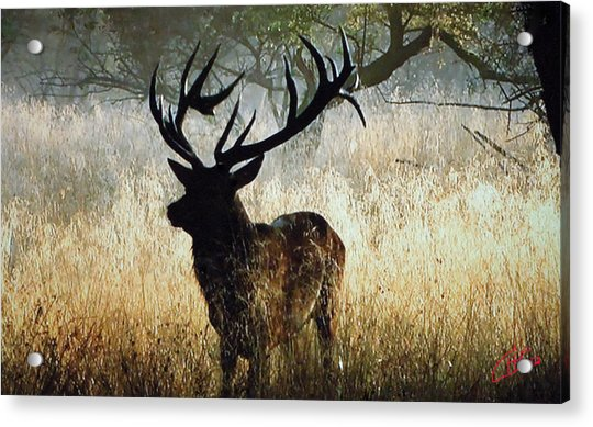 Acrylic Print featuring the photograph Autumn Forest Walk In Denmark  by Colette V Hera  Guggenheim